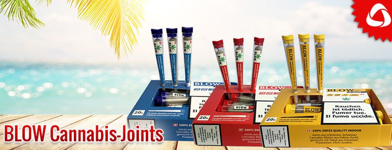 BLOW Cannabis-Joints