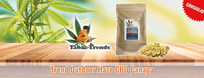 Trend Outdoor Haze CBD Canapa