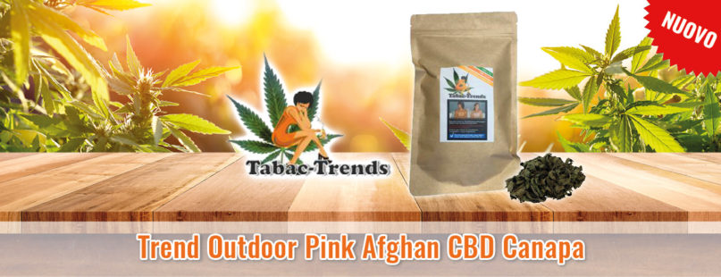Trend Outdoor Pink Afghan CBD Canapa