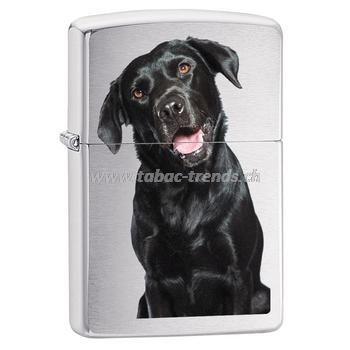 Zippo Dog