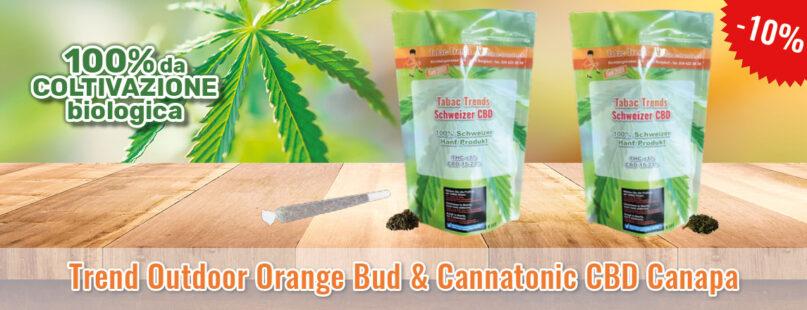 Trend Outdoor Orange Bud & Cannatonic CBD Canapa